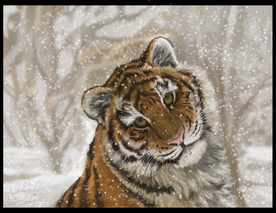 Tiger in winter.jpg
