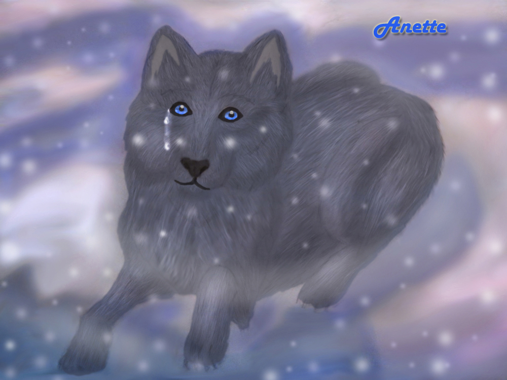 Black_wolf_with_blue_eyes.JPG